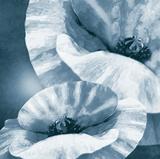 Poppy Dusk II Giclee Print by Lucy Meadows
