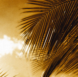 Light on Palms IV Reproduction procédé giclée par Malcolm Sanders