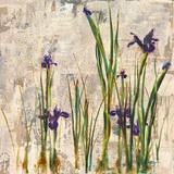 Iris Mist Giclee Print by  Carney