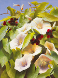 Convolvulus and Blackberries Giclee Print by Mary Dipnall