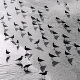 Escher&#39;s Seagulls Giclee Print by Michael Kahn