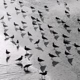 Escher's Seagulls Giclee Print by Michael Kahn
