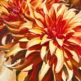 Sun Dahlia Giclee Print by Sarah Caswell