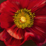 Chocolate Poppy I Giclee Print by  Dysart