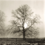 Winter Mist Giclee Print by Michael Kahn