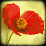 Fresh Poppies I Giclee Print by Rossana Novella