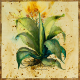 Aloe IV Giclee Print by  Hollack