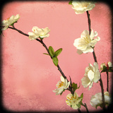 Pink Blossom I Giclee Print by Rossana Novella