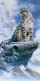 High Spirit - Snow Leopard Giclee Print by Kim Thompson