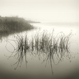 Reeds Giclee Print by Michael Kahn