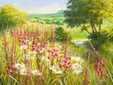 A Meadow In Spring Giclee Print by Mary Dipnall