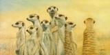 Meerkats Giclee Print by Henk Van Zanten