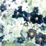 Pretty Black Flowers IV Giclee Print by Suzie Pibworth