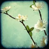 Apple Blossom I Giclee Print by Rossana Novella