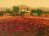 Evening Light, Languedoc Giclee Print by Hazel Barker