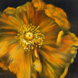 Chocolate Poppy IV Giclee Print by  Dysart