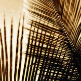 Light on Palms I Impression giclée par Malcolm Sanders