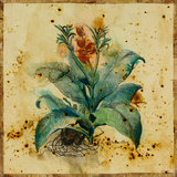 Aloe II Giclee Print by  Hollack