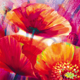 Amid Poppies I Giclee Print by Nick Vivian