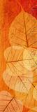 Falling Leaves II Giclee Print by Malcolm Sanders
