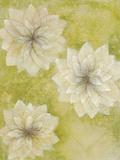 Dahlia Dream II Giclee Print by Emma Forrester