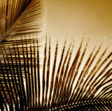 Light on Palms III Giclee Print by Malcolm Sanders