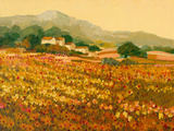 Afternoon Sun, Languedoc Giclee Print by Hazel Barker