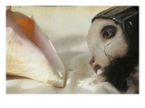 A Dolls Head and a Shell Photographic Print by Mia Friedrich
