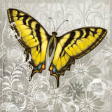 Yellow Butterfly III Print by Alan Hopfensperger