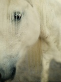 Portrait of a Horse Photographic Print by Mia Friedrich