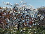 Prunus Posters by John Hancock