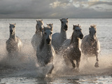 Horses Landing at the Beach Posters by Jorge Llovet