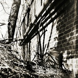 Corner of a Wall with a Tree and Shadows Photographic Print by Katrin Adam