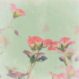 Romantic Meadow Prints by Tom Lambert