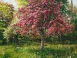 Cherry Tree Prints by John Hancock
