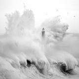 Marina Cano - Birds in the Storm - Reprodüksiyon