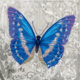 Blue Butterfly I Prints by Alan Hopfensperger