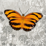 Orange Butterfly I Poster by Alan Hopfensperger