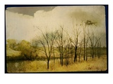 A Country Scene with Small Trees Photographic Print by Mia Friedrich