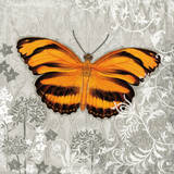 Orange Butterfly I Prints by Alan Hopfensperger