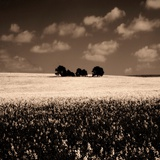 A Group of Trees in a Field Photographic Print by Mark James Gaylard