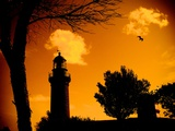 A Light House with Seagull Photographic Print by Mark James Gaylard