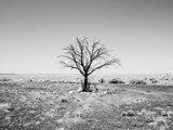 Arizona Tree Abstract Landscape Black and White, Two Guns Ghost Town Photographic Print by Kevin Lange