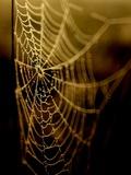 Night Life Photographic Print by Rob Lambert