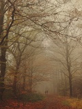 Foggy Forest Photographic Print by Peter Polter