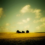 Trees in a Farmers Field Photographic Print by Mark James Gaylard