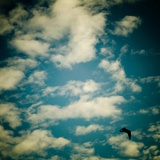 A Bluse Sky with White Clouds and a Seagull Photographic Print by Mark James Gaylard