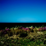 Sand Dunes with Grass and Flowers Photographic Print by Mark James Gaylard