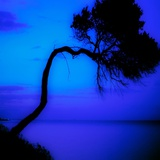 An Twisted Fir Tree with Blue Sea Photographic Print by Mark James Gaylard