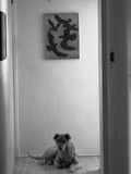 Dog Sitting at the End of the Hallway in Black and White Photographic Print by Kevin Lange